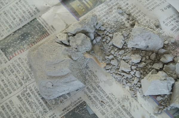 ダイソー発掘玩具(恐竜化石)